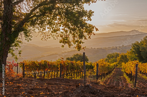 fototapeta na szkło Magnificent view of picturesque autumn vineyards in the Tuscany region in morning sunlight, Italy