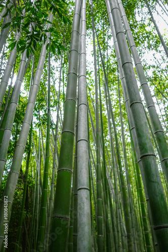 Papiers peints Bambou Arashiyama bamboo forest, Kyoto, Japan