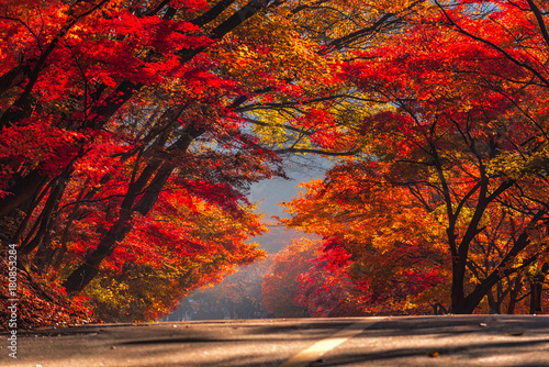 Foto op Plexiglas Chocoladebruin Autumn Maple in Naejangsan national park, South korea