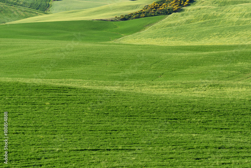 Foto op Plexiglas Groene Magnificent spring rural landscape. Beautiful view of typical tuscan green wave hills, cypresses trees, magical sunlight, beautiful golden fields and meadows.Tuscany, Italy, Europe