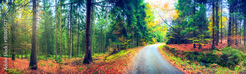 Poster Natuur Panoramic autumn landscape with forest road. Fall nature background