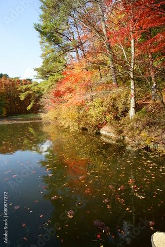 Foto op Canvas Bomen 日本の秋