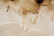 canvas print picture - Coffee stain / Dry coffee stain on paper background.