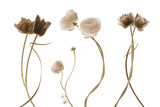 flores aisladas efecto vintage