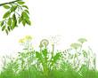 Gräser mit Kräutern und Blumen, Illustration