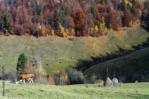 Fotobehang Olijf Autumn in Moeciu village, Transylvania, Romania