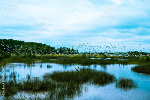 flock of birds fly over south carolina low country marsh on cloudy day Fototapete