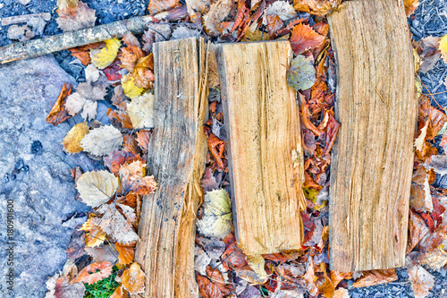 Foto op Canvas Brandhout textuur Macro closeup flat top view of three wooden firewood pine wood logs for camping campfire split open lying on autumn fall foliage leaves and rocks