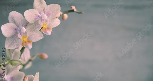 In de dag Orchidee Orchidee, Orchideenblüten