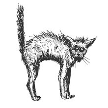 Old Black Cat In Hand Drawn Vi...