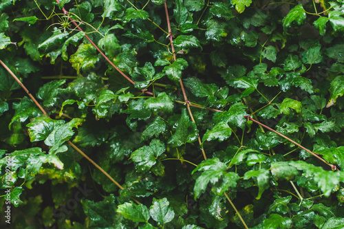 Cuadros en Lienzo Green natural background 7