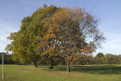 Photo Autumn Trees in Wickford Memorial Park, Essex, England