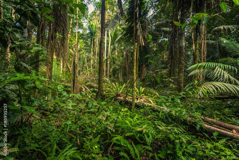 Fototapeta Manu National Park, Peru - August 07, 2017: The Amazon rainforest in Manu National Park, Peru