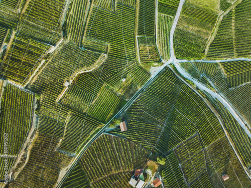 Poster de jardin Vue aerienne beautiful aerial landscape of wine yards, top view of grape plantation