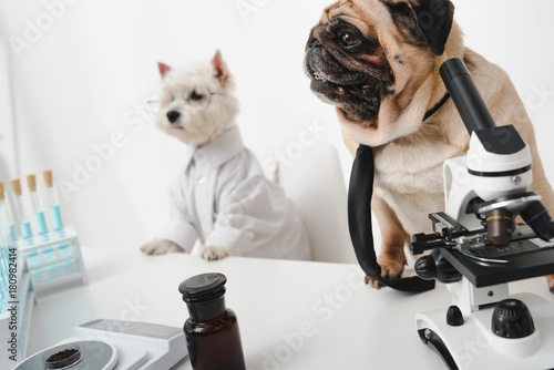 dogs scientists in lab Wallpaper Mural