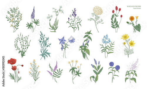 Valokuva Set of realistic detailed colorful drawings of wild meadow herbs, herbaceous flowering plants, beautiful blooming flowers isolated on white background