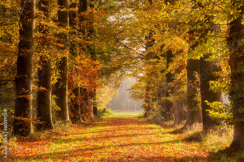 Tuinposter Weg in bos Fall forest path Autumn leaves