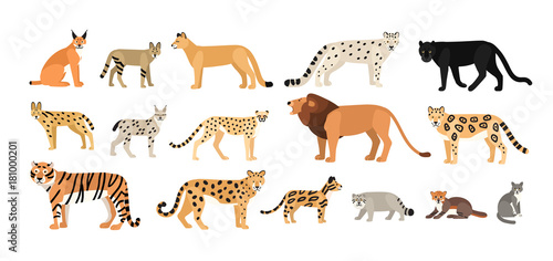 Photo  Collection of different wild and domestic cats