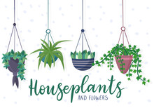 Hanging House Plants And Flowers In Pots.