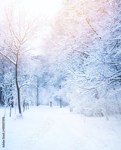 Fotobehang Wit Beautiful alley in the park in winter with trees covered with snow and hoarfrost. Girl in distance walking with a dog. Beautiful artistic image of winter. Tinted blue and pink.