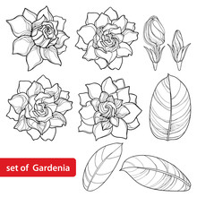 Vector Set With Outline Garden...