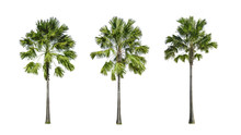 Set Of Palm Tree Isolate On White