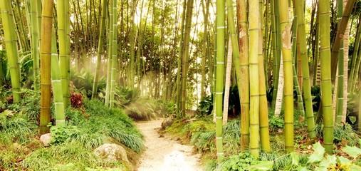 Bambuswald mit Pfad im Dunst