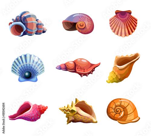 Colorful tropical set of sea shells Fototapeta