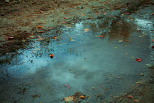 Autumn Leafs In Puddle