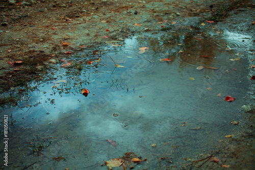 Fotomural Autumn leafs in puddle