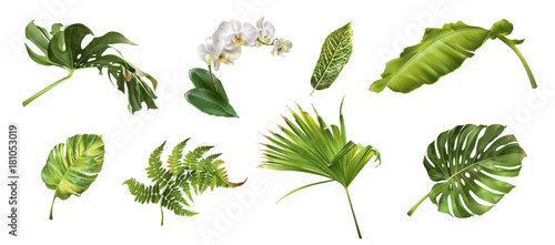 Foto  Tropical plants set