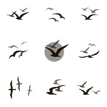 Collection Of Black Flying Sea...