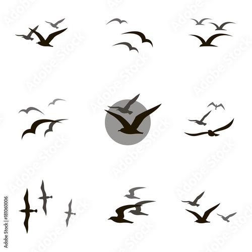Fototapeta premium zbiór czarne sylwetki latające mewa na białym tle