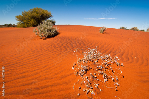 Red sand dune and desert vegetation in central Australia
