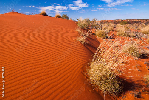 Ingelijste posters Rood traf. Red sand dunes and desert vegetation in central Australia