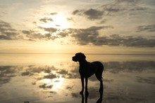 The Greatdane At The Sea