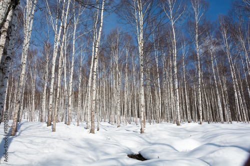 Deurstickers Berkbosje 冬のシラカバ林と青空