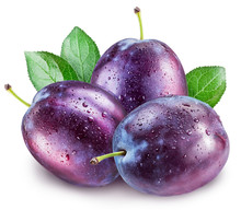 Plums With Water Drops. File C...