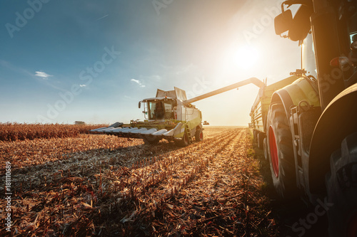 Fotografia  Harvesting in autumn