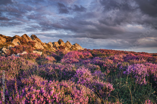 Poster Hill Blooming Upland Heather Flowers