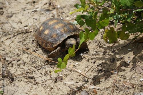 Photo  tortoise walking on the sand on a beach