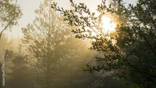 Papiers peints Foret brouillard Morgenlicht im Wald