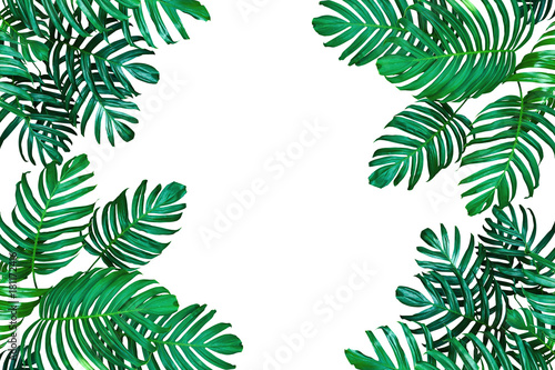 Tropical leaf nature frame layout, Monstera philodendron the ...
