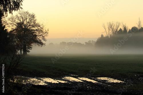 Fotografía  The Fog / der Tag beginnt sinnlich im Nebel