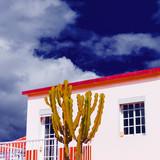 Cactus in a tropical location. Minimal design - 181183228