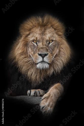 Foto op Plexiglas Leeuw Lion - King