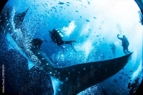 Plakat Rekin wielorybi z Wysp Galapagos Ekwador Nurkowanie z akwalungiem