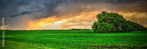 Foto op Plexiglas Groene Calm after the Storm