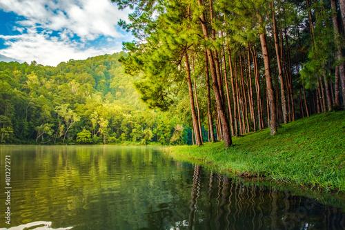 wysokie-sosny-na-brzegu-jeziora-w-letni-dzien