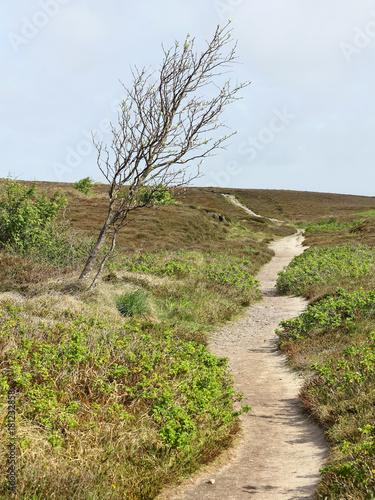 Fotografie, Obraz  Path in the heath and windswept tree